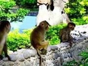 Остров Обезьян – интересное место при посещении прекрасного города Нячанга