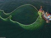 Завораживающие фотографии рыболовных сетей в водах Вьетнама с высоты птичьего полета