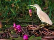 Национальный парк Чам Тьим