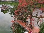 Сезон цветения хлопковых деревьев