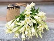 Лилии – цветы апреля