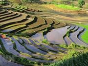 Красота террасных полей в сезон поливных полей в общине Ити