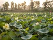 Уникальный пруд с 170 сортами лотоса в столице