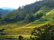 Посетить террасные поля Хоангшуфи онлайн