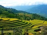 Красивые террасные поля в Хоангшуфи