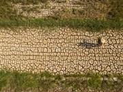 Местные жители дельты Меконга реагируют на засуху и подтопление местности соленой водой
