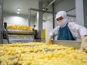 Сочные ананасы в cовхозе Донгжао