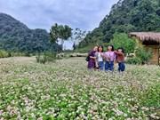 Цветочные поля гречихи: популярные места для визита в Хажанге