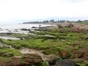 Вьетнамский туризм: древние заросшие мхом камни в Биньтхуане