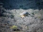 Цветочное плато Моктьяу в первые дни весны