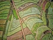 Цветочные поля в поселке Шолыон
