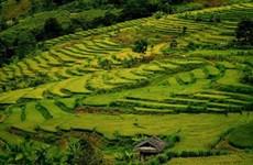 Дьенбьен: красота террасных полей в высоких горах Таленг