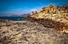 Вьетнамское море и острова: биосферный заповедник Нуичуа - место, где заботятся о жизни морских черепах