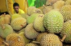 Плоды джекфрута и дуриана станут источниками чистой электроэнергии в будущем