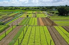 EVFTA: Благоприятные условия для экспорта вьетнамской сельхозпродукции