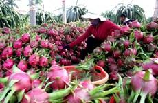 Вьетнамские компании стремятся оживить экспорт сельхозпродукции в Китай