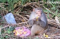 Вернуть обезьян обратно в лес по предупреждению COVID-19