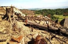 Статья 6: Защита лесов в Центральном нагорье после распоряжения о запрете добычи древесины в естественных лесах