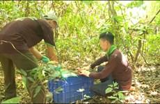Куангбинь: в национальном парке выпущено на волю более 40 животных