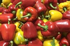 РК будет экспортировать перец во Вьетнам