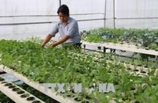 В Тьенжанге проводится плодотворная реструктуризация сельского хозяйства
