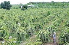 Экспортеры фруктов ищут новые рынки, чтобы пережить пандемию