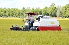Анжанг отправит 126 тонн ароматного риса в ЕС по нулевой тарифной ставке