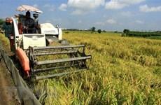 Объем экспорта риса снизился, но все же вырос в цене