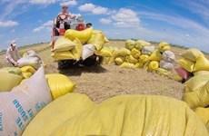 Возможность Вьетнама экспортировать рис в Австралию