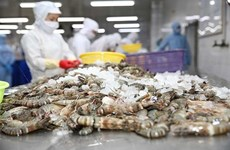 Компания Minh Phu выступает против антидемпинговых пошлин США на замороженные креветки