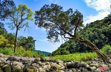 Национальный парк Вукуанг получил сертификат Парка наследия АСЕАН