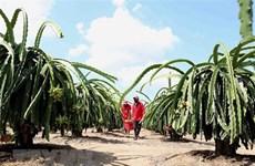 UKVFTA способствует экспорту сельскохозяйственной продукции из Вьетнама в Великобританию