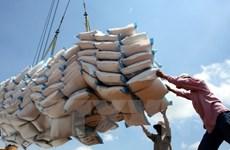 Перспективы экспорта риса в первом квартале остаются обнадеживающими