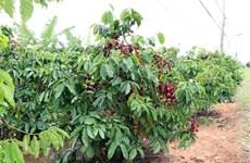 Инсайдеры: трудности для кофейного сектора еще впереди