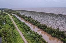 Устойчивое развитие дельты реки Меконг, адаптирующееся к изменению климата