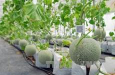 Вьетнам развивает и применяет биотехнологии в сельском хозяйстве