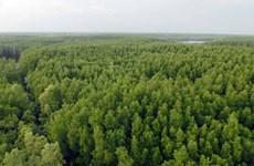 Около 108.260 га новых лесов высажено в первой половине года