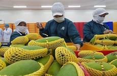 Экспорт овощей и фруктов достигнет 4 млрд. долл. США