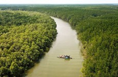 Утвержден проект по охране и развитию лесов прибрежных территорий