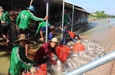 Объем экспорта рыбы в этом году может восстановиться