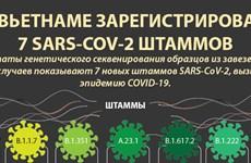 Во Вьетнаме зарегистрировано 7 вариантов SARS-CoV-2