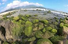 Риф Намо - зеленая жемчужина Дананга