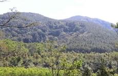 Центральное нагорье принимает меры по предотвращению лесных пожаров в засушливый сезон