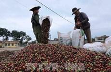 Экспорт кофе из Вьетнама в РК может увеличиться