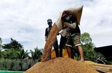 Рост цен на вьетнамский рис на внутреннем и внешнем рынках