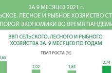 За 9 месяцев 2021 г. сельское, лесное и рыбное хозяйство стало опорой экономики во время пандемии