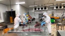 Экспорт тунца из Вьетнама в ЕС резко вырос благодаря EVFTA