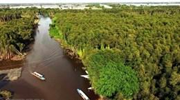 Новое планирование рассматривает изменение климата как возможность для дельты Меконга