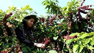 Алжир - потенциальный рынок для вьетнамских продуктов
