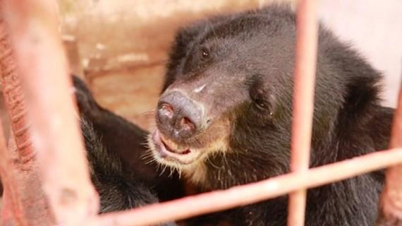 Совместные усилия по борьбе с незаконной торговлей дикими животными